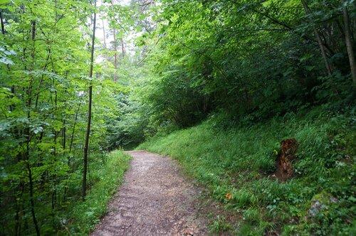 Лес у канатной дороги