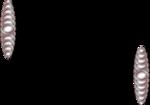 ASAMN00113-5.png