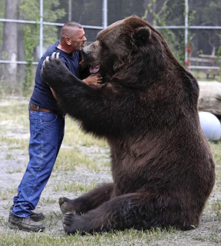 Джим Ковальчик обнимает большого друга, валяется с ним на земле, кормит изо рта зефиром. Это зв