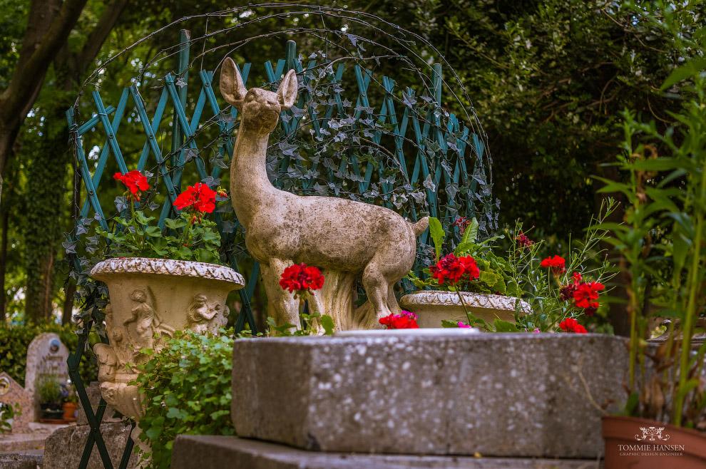 11. Интересно, что в России в Царском Селе есть кладбище для лошадей, которое появилось задолго