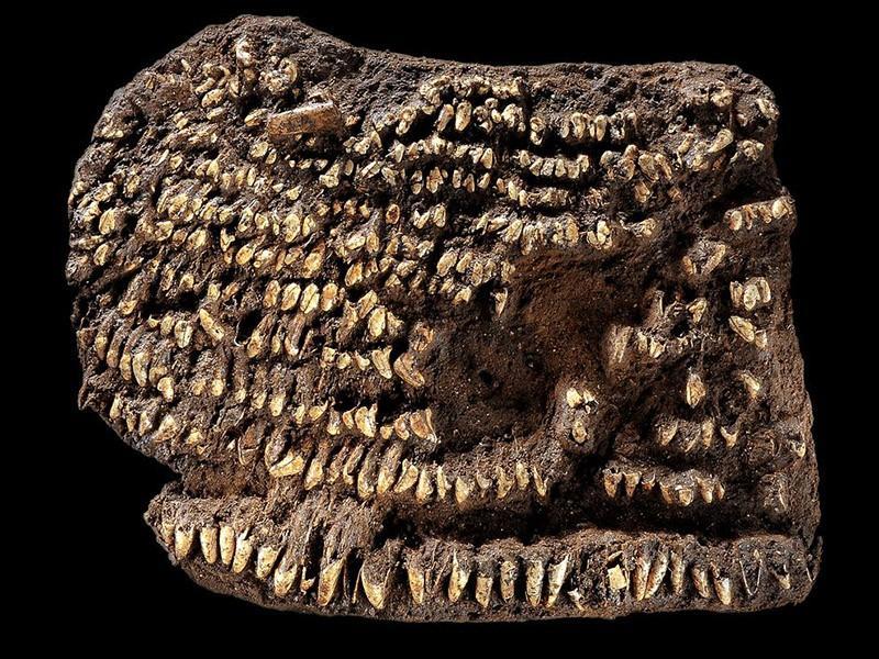 11. Самый старый кошелек (4500 лет). Эти собачьи зубы — все, что осталось от распавшегося 4500-летне