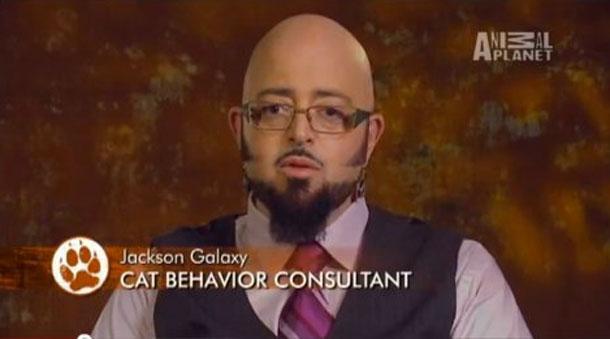 Джексон Гэлакси, консультант по поведению кошек.