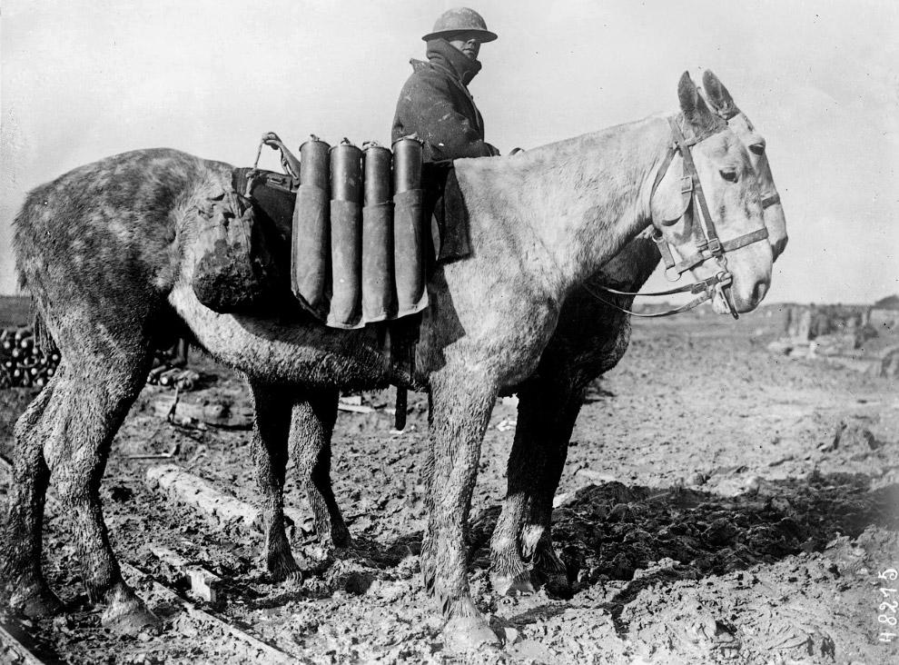 Верблюды на водопое, 1916 год. (Фото Library of Congress):