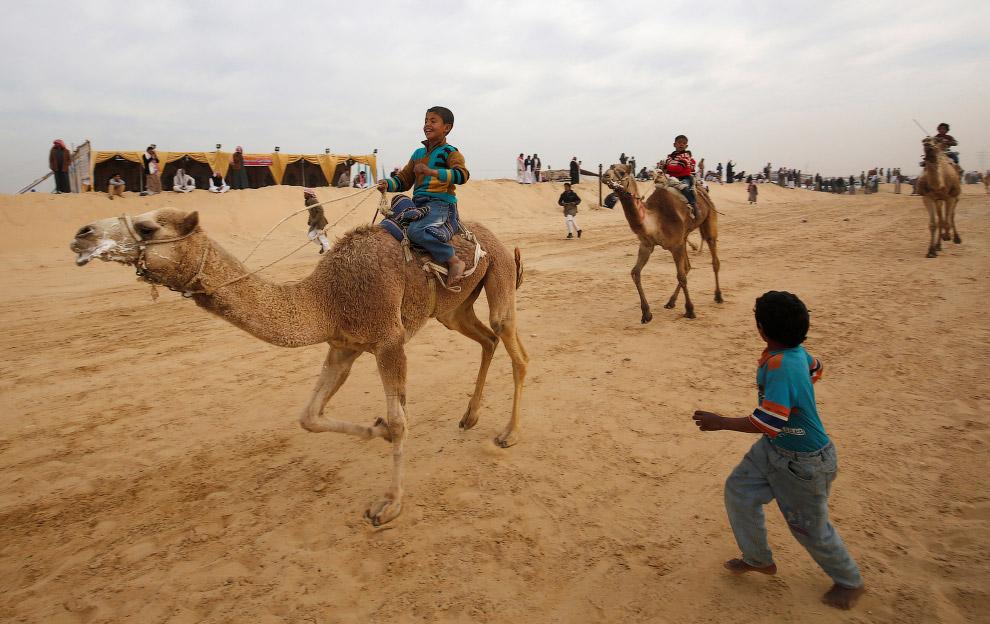 6. Верблюды могут развивать скорость до 65 км/ч на коротких дистанциях. (Фото Amr Abdallah Dals