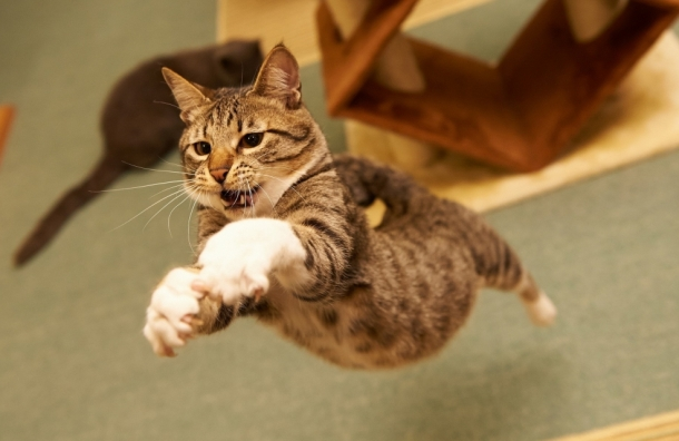 Гражданин Благовещенска реализовал «вещего» кота за5 млн руб.