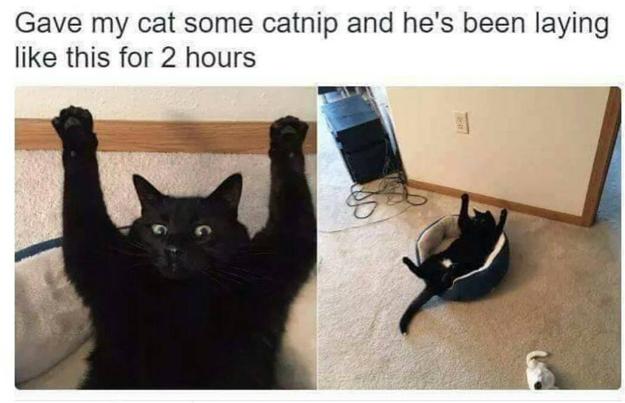 «Я положил своего кота в корзинку в такой позе, и он оставался в ней два часа». Разве не мило?