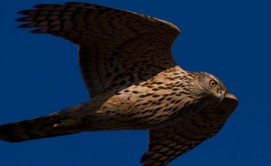 7 самых опасных птиц на свете