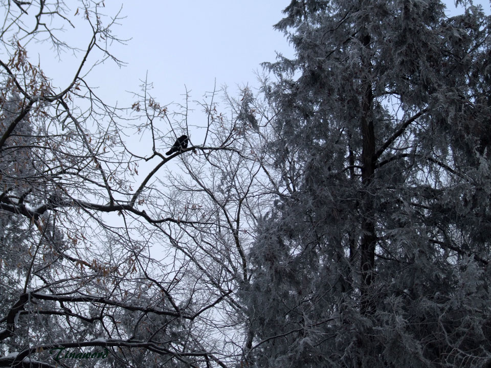 птиц-14.jpg