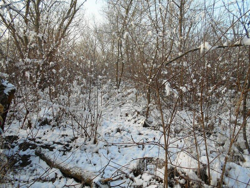 Начало Зимы, в походе, Природы снежное убранство ... DSCN0283.JPG