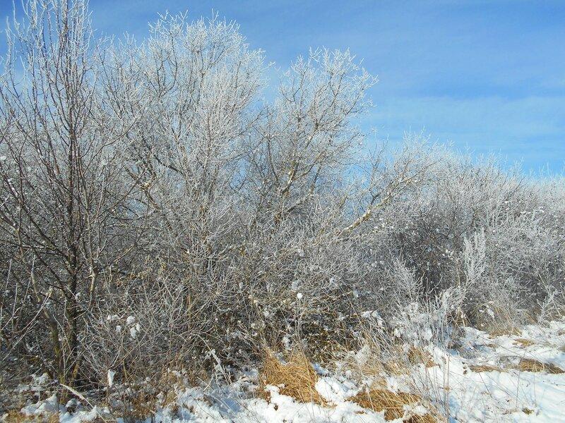 Начало Зимы, в походе, Природы снежное убранство ... DSCN0353.JPG