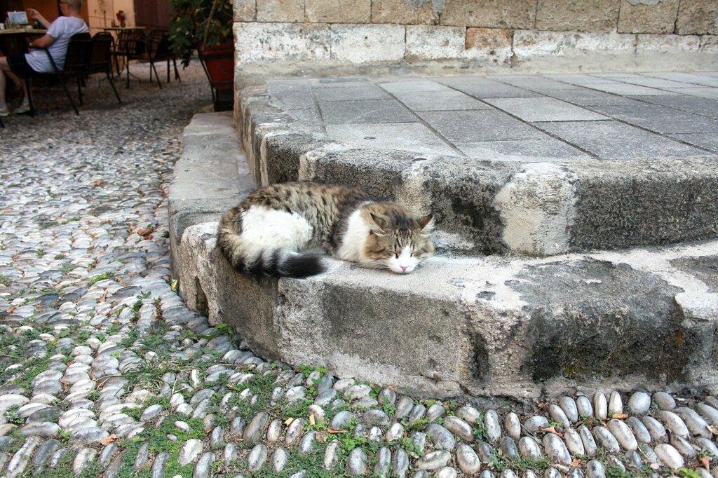 IMG_7641-Коты.jpg