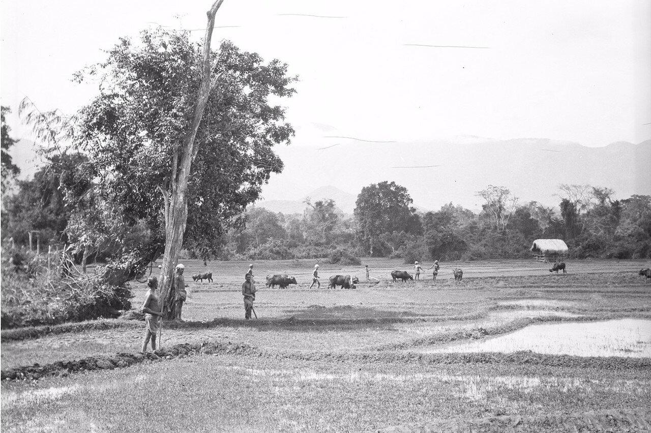 58. На рисовом поле в Моландени