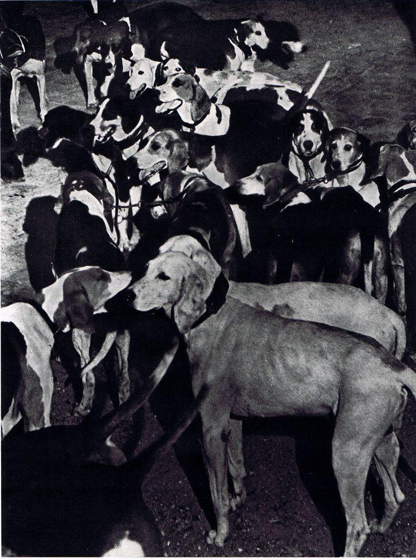 1937. Гончие