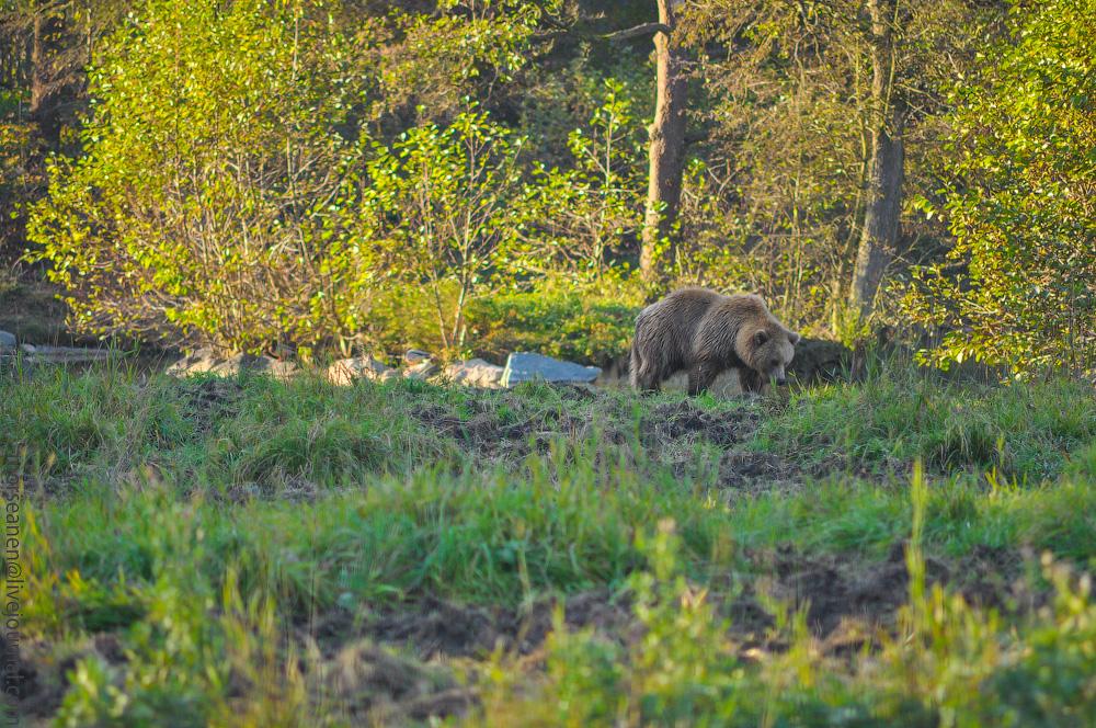 Tierpark-(43).jpg