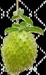Гуанабана (сметанное яблоко) (1).png