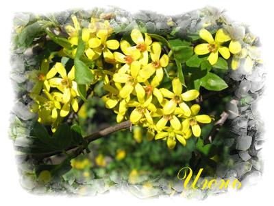 Июнь - время цветения