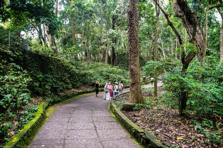 2. Сам лес является природным заповедником, на территории которого расположен индуистский храм 14 ве