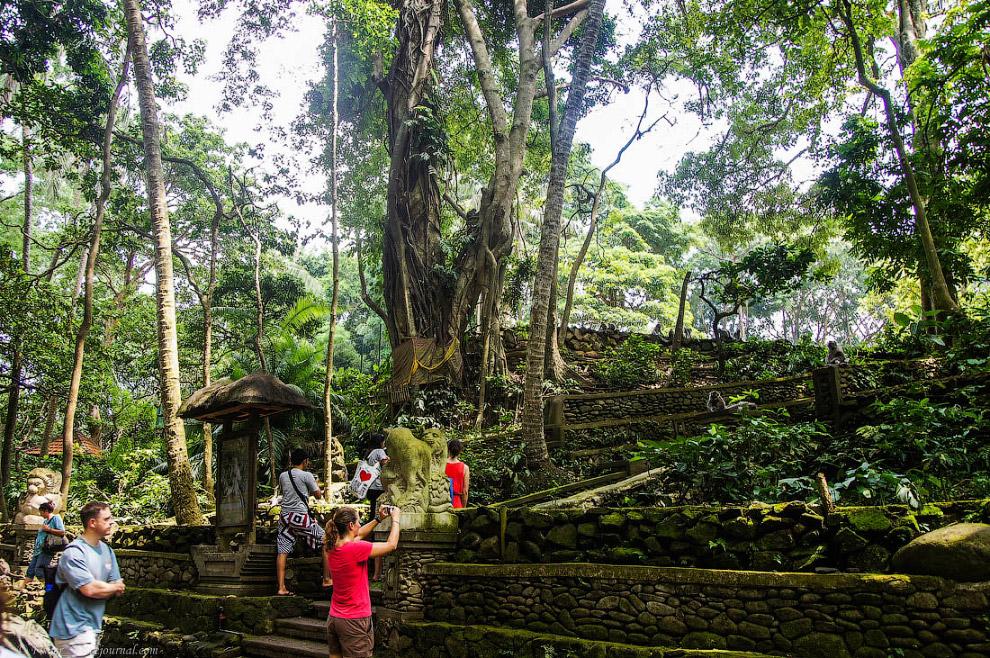 3. Площадь леса составляет около 12 гектар, на которых помимо самого леса и храмов, уместилось