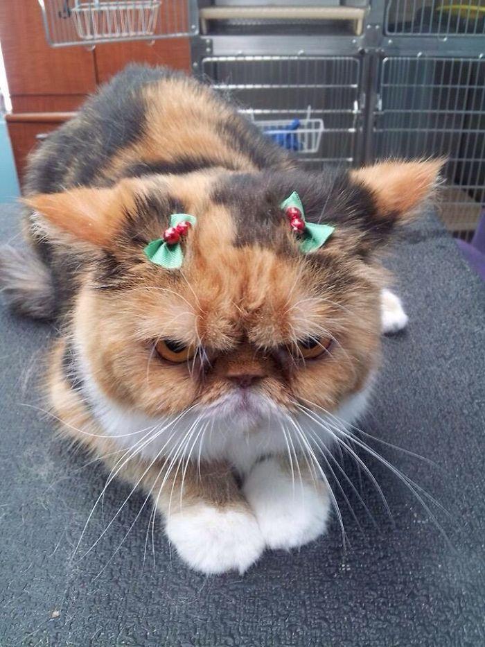 Веселого Рождества.