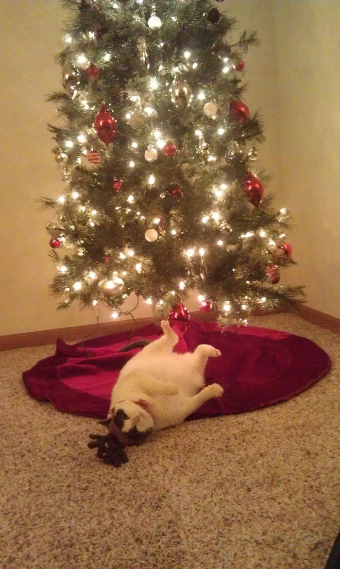 Напился шампанского и упал под елку.