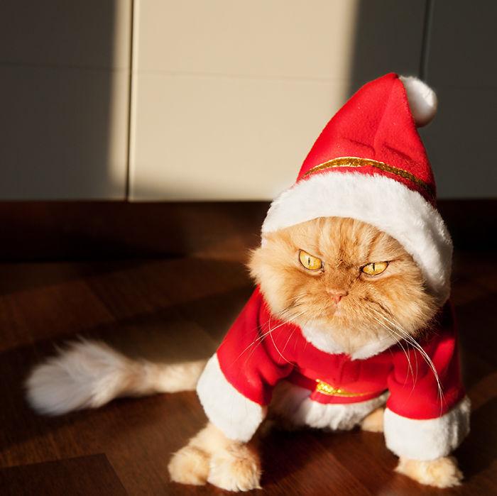 Кот Гарфи очень недоволен.