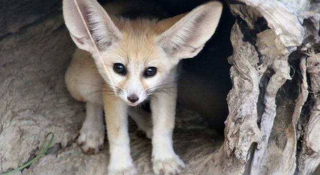 © Paul Fahy/Taronga Zoo/National Geographic   Осьминог