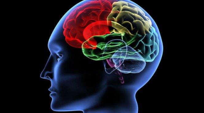 Ученые отыскали виноватые взаикании области мозга