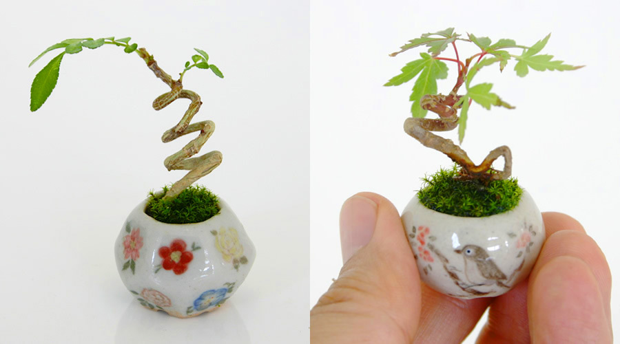 Ultra Small Bonsai Plants Give New Meaning to the Word Miniature