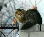 Кот Марсик с телефонного столба