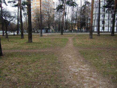 11_2 газон 2а.JPG