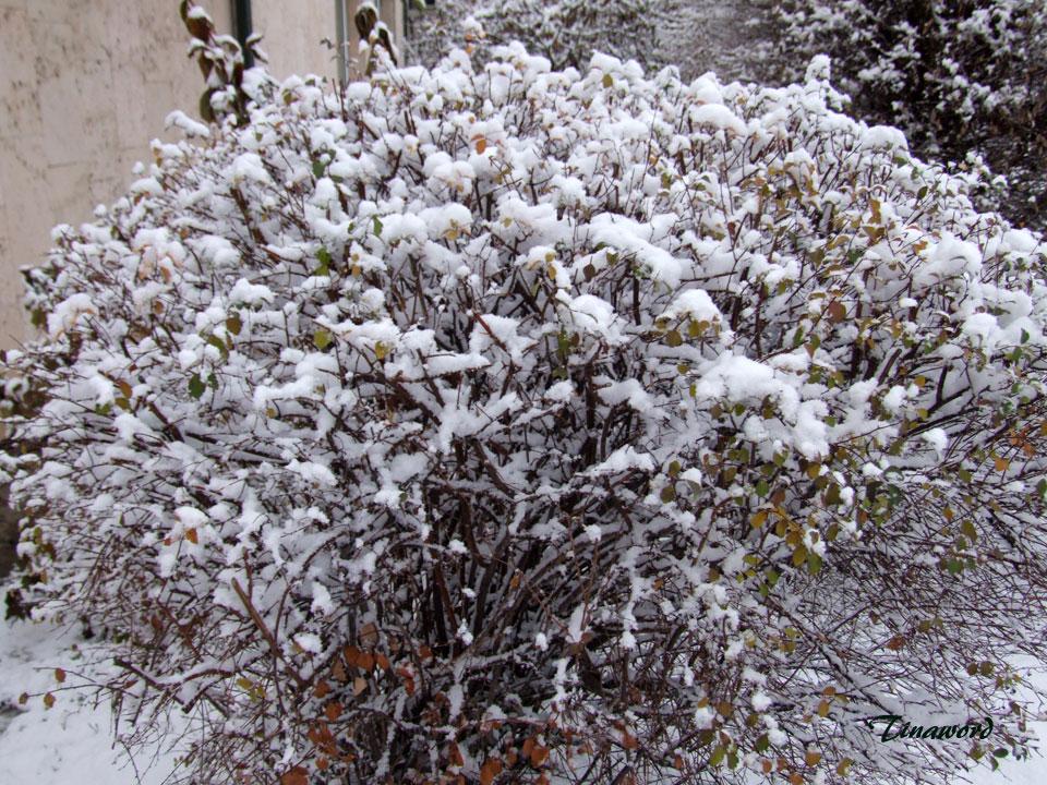 Вот-и-снег-4.jpg