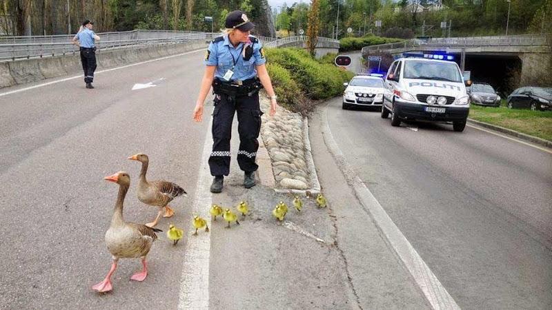 Про норвежскую дорожную полицию