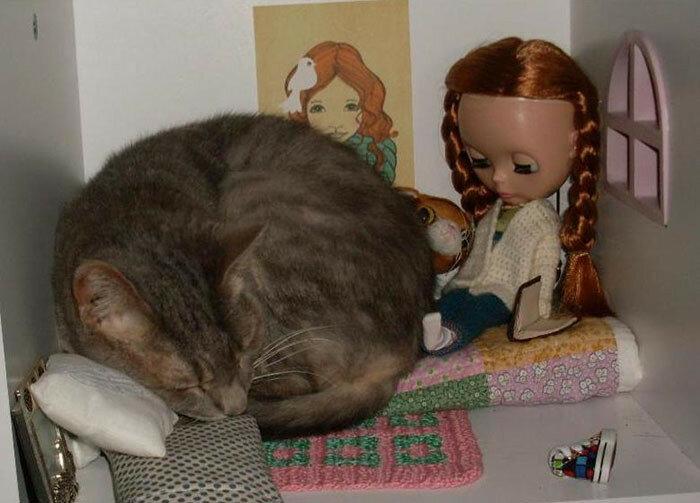 Куклохобби и коты
