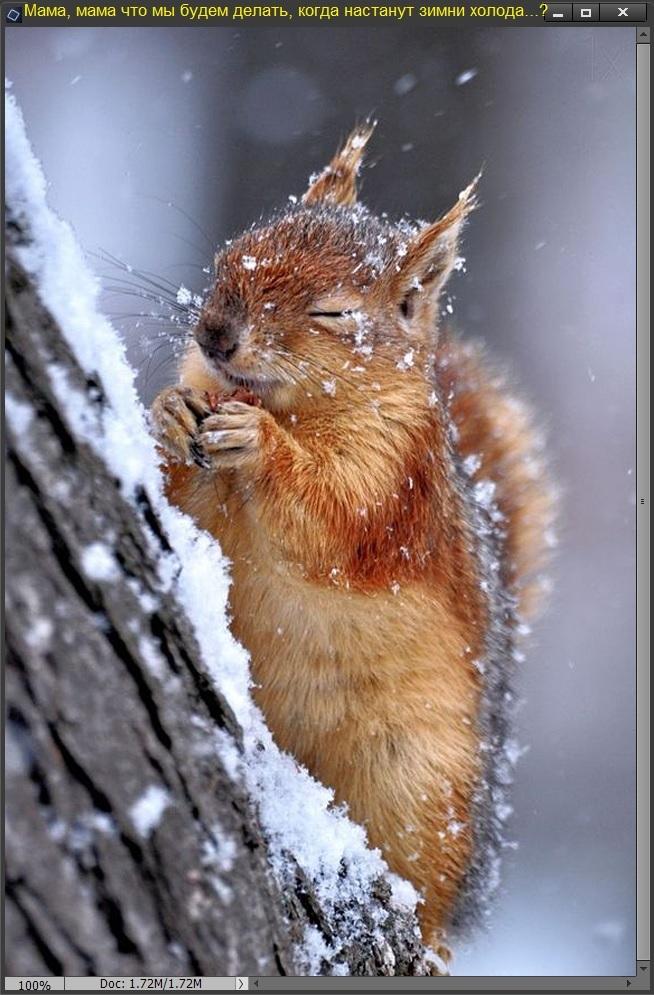 Мама, мама что мы будем делать когда настанут зимни холода...?