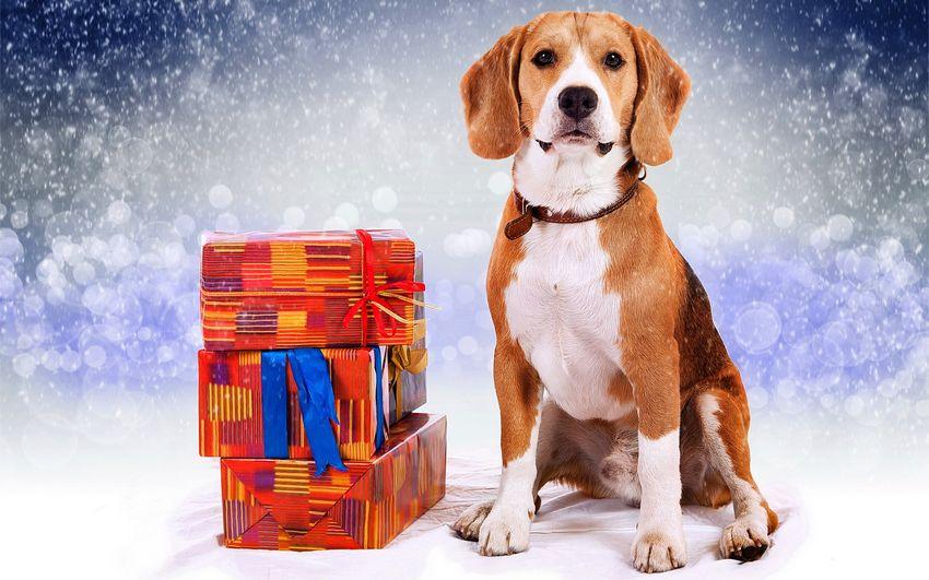 Новый год, новогодние подарки, картинки