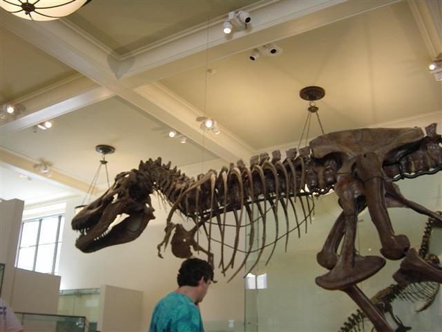 18 мая — Международный день музеев! american museum natural history открытки фото рисунки картинки поздравления