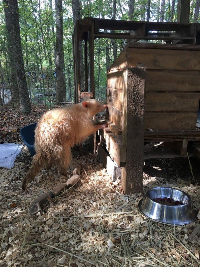 У Максины Бейрд спросили, не могла бы она забрать это животное к себе.