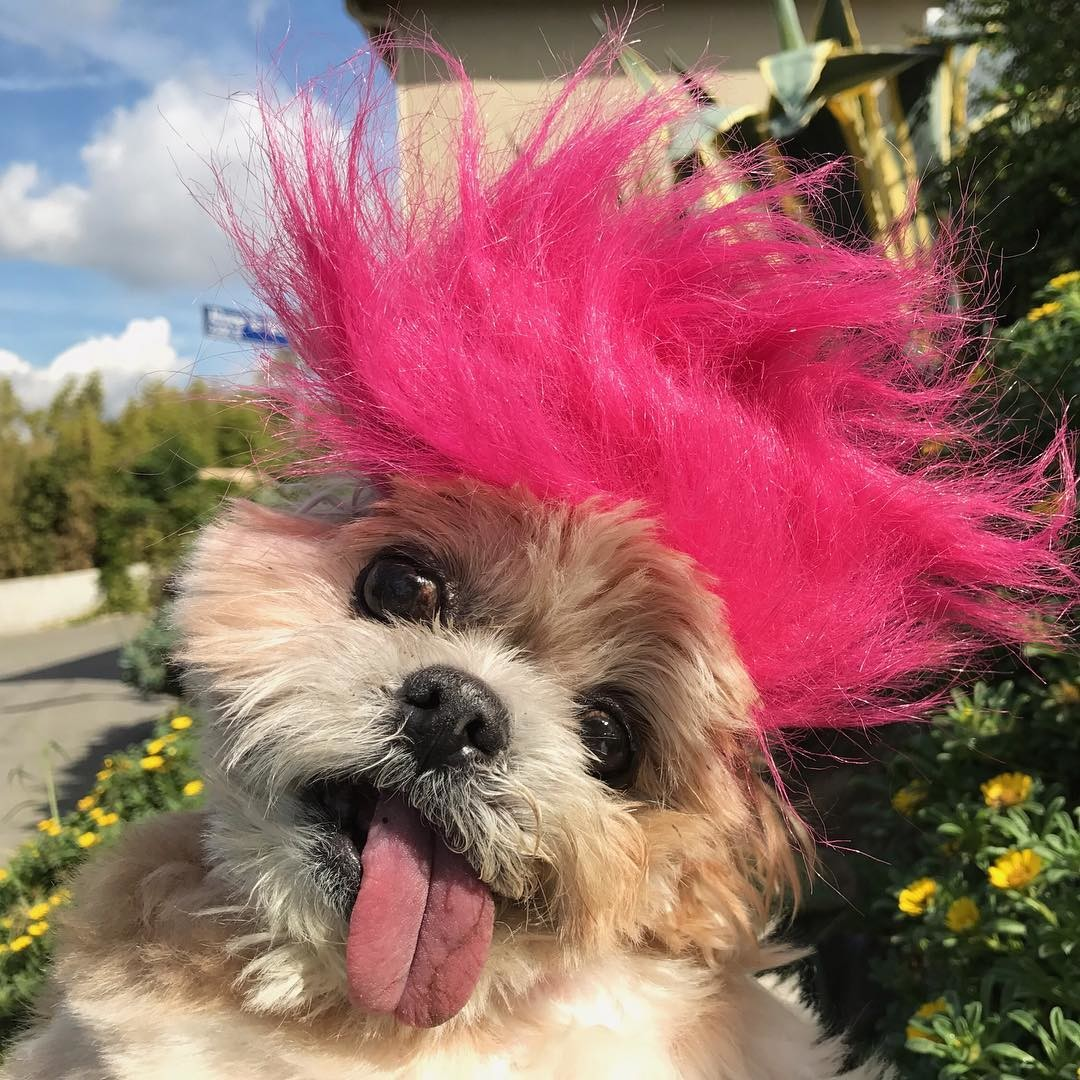 Как брошенная собака обрела новый дом и стала звездой Инстаграма