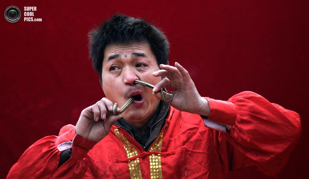 Фокусник просовывает небольшую змею через носоглотку о время выступления на ярмарке в Пекине.(R