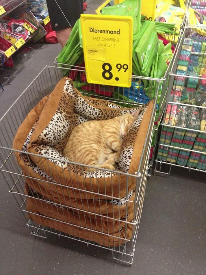 Где упал, там и заснул.