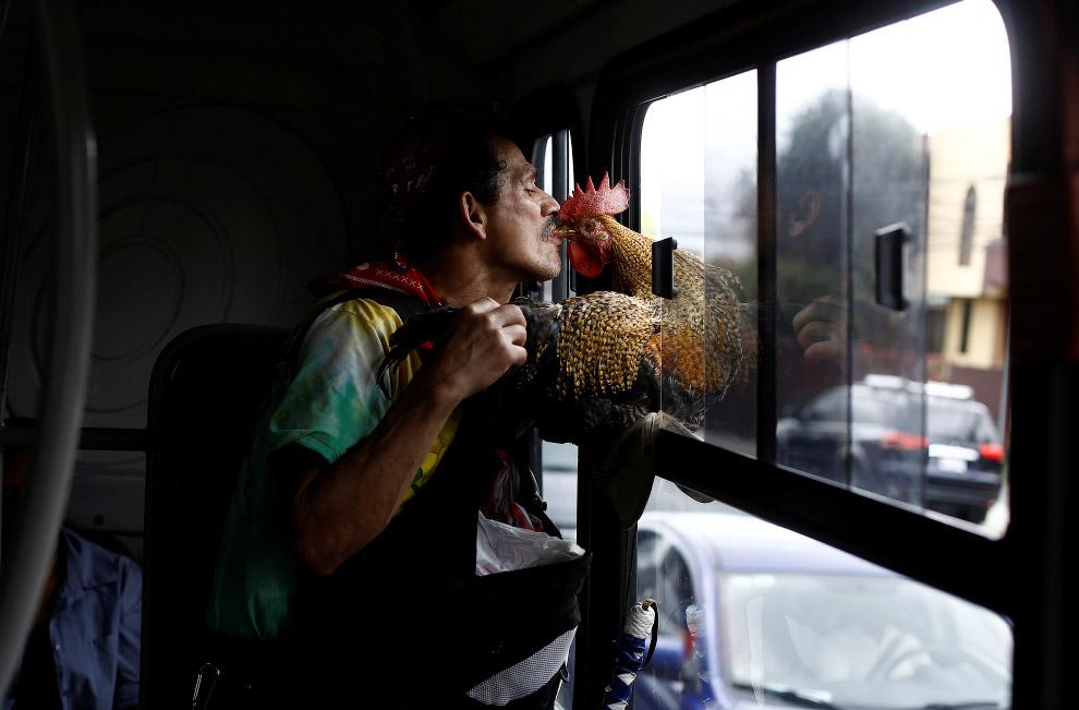 11. Перекусываем…(Фото Juan Carlos Ulate | Reuters):
