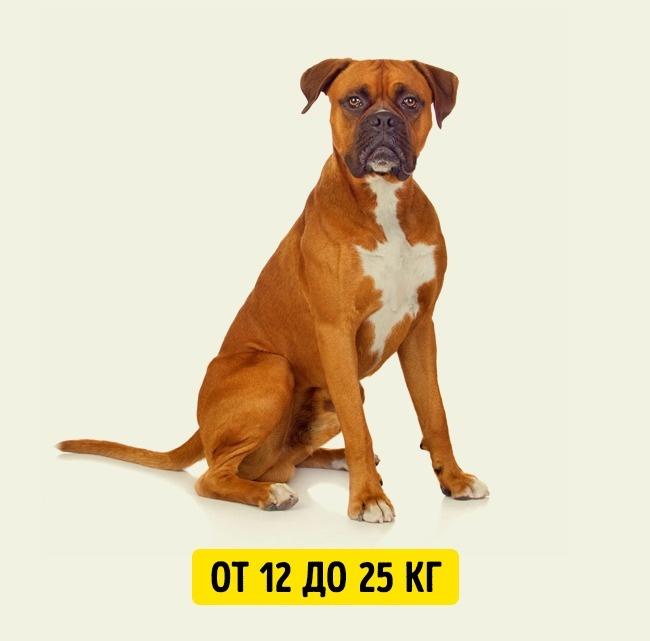 © depositphotos.com  Продолжительность жизни средних собак меньше , чем умаленьких. Притом, к