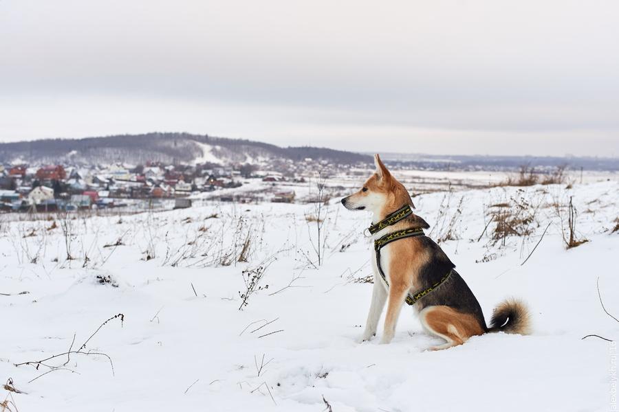alexbelykh.ru, ореховая гора