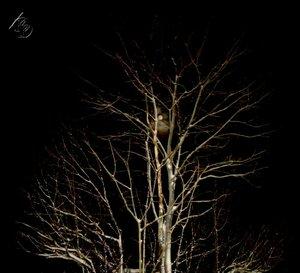 В кронах деревьяв