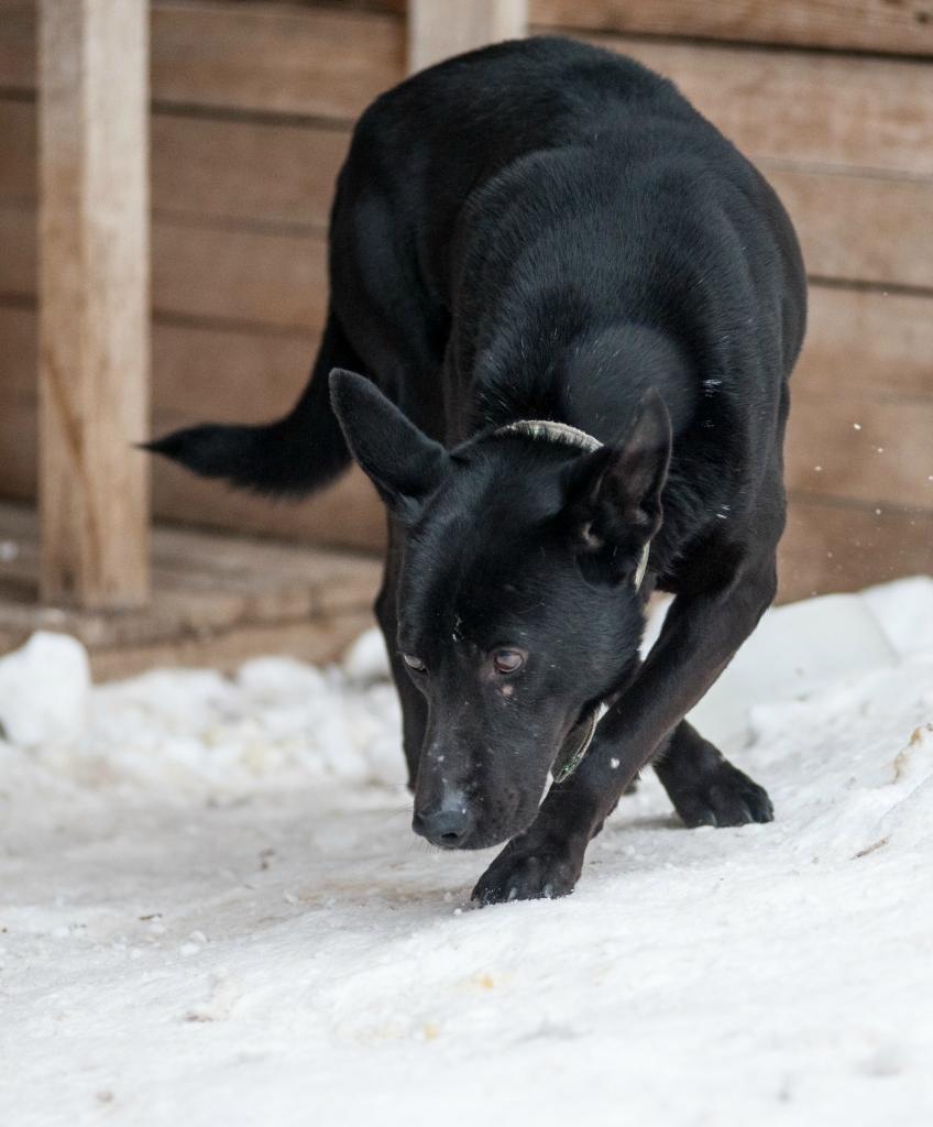 ЧеГевара собака из приюта догпорта