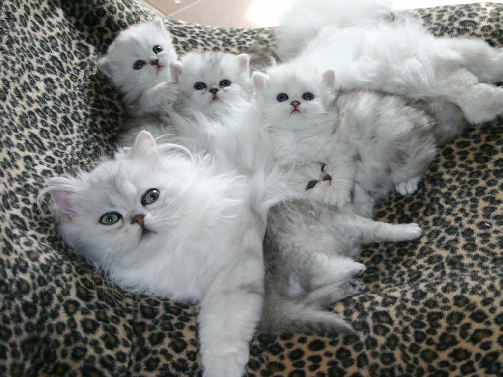 23. Котята вашей кошки пушисты и забавны уже через неделю после рождения.