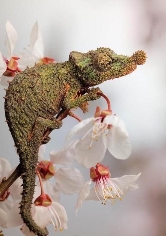 Большинство ящериц хищники, однако есть не мало исключительно растительноядных