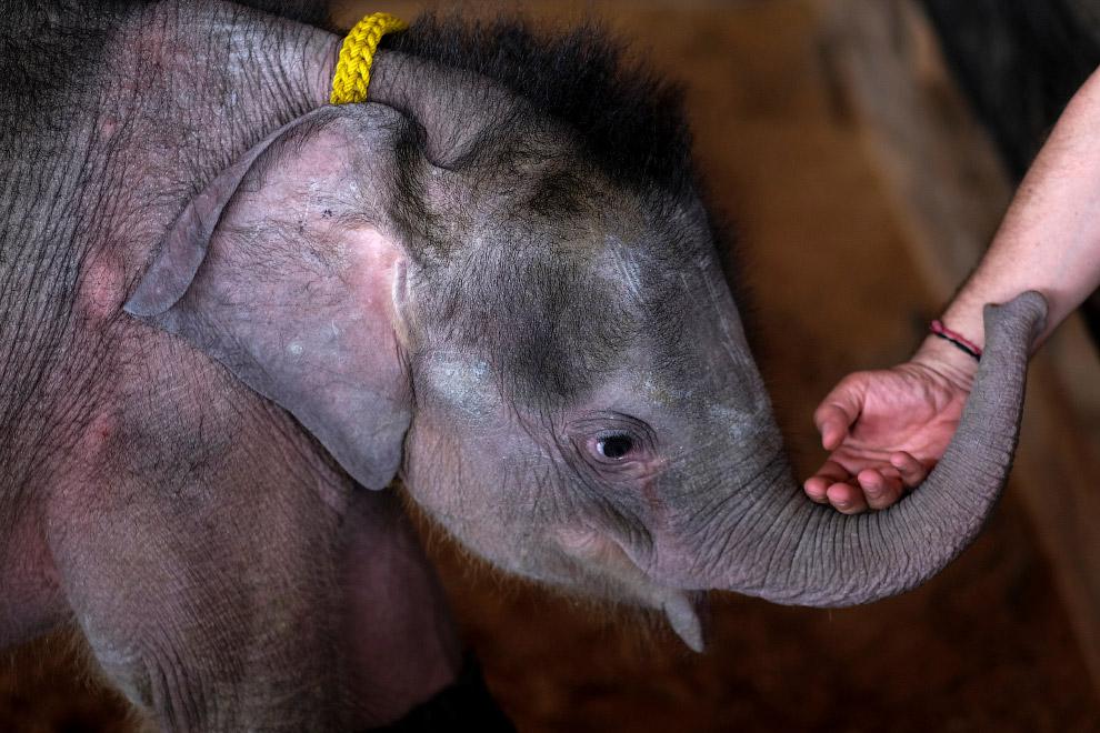 3. Это её отдельный вольер в тропическом парке Нонг Нуч в Паттайе. (Фото Athit Perawongmetha |