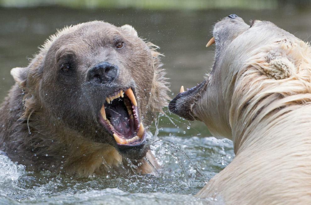 17. Викунья — вид парнокопытных млекопитающих семейства верблюдовых. Национальный заповедник в