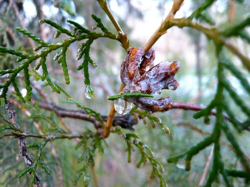 Осенний этюд в капле дождя